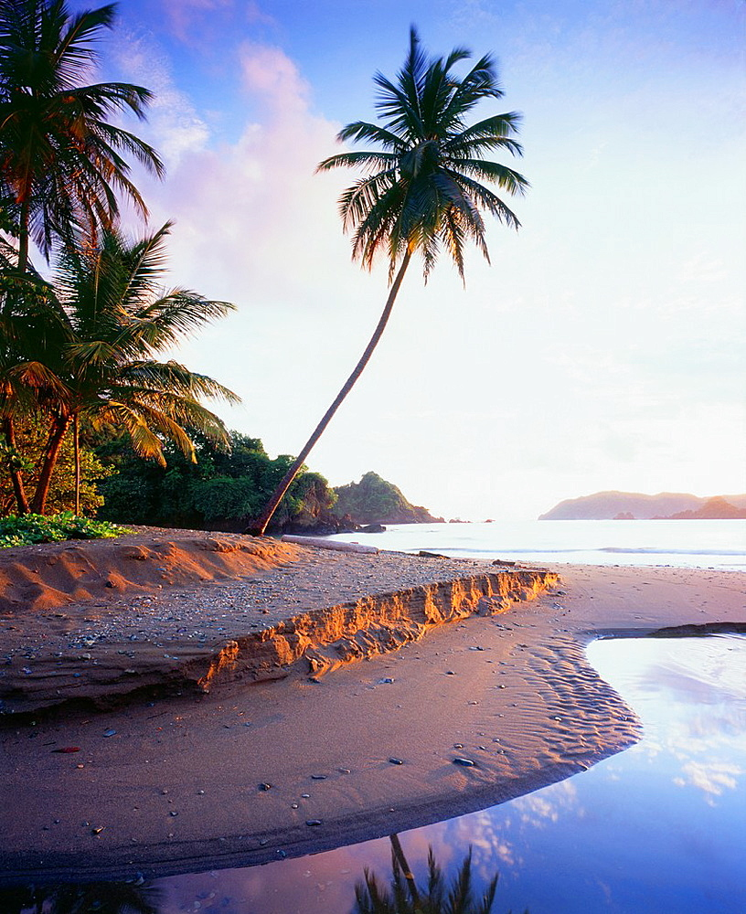 Beach at Tyrell´s Bay with palm tree Near village of Speyside, island of Tobago Trinidad and Tobago Caribbean