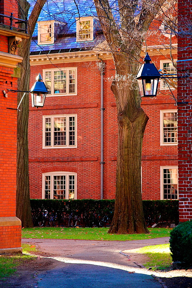 Historic red brick dormitory buildings on the campus of Harvard University in Cambridge, MA