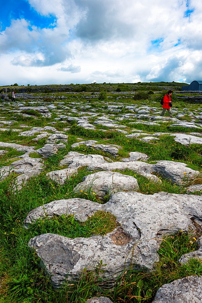 The Burren, Co  Claire, Ireland  Limestone pavements crisscrossing cracks or agrikesa, leaving isolated rocks called aclintsa