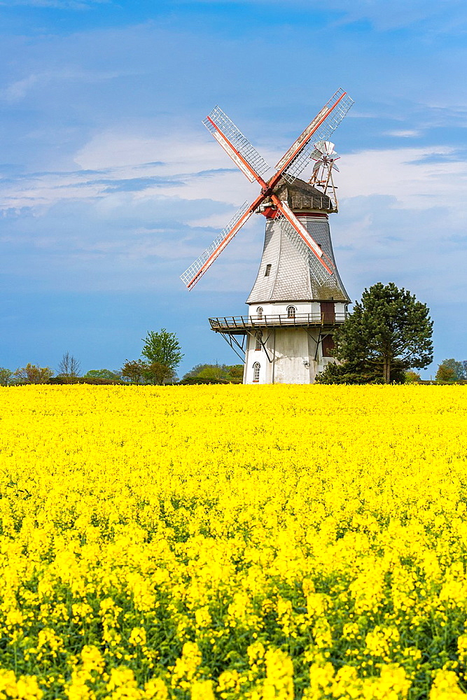 The picturesque Behlmer mill, Engeln, Lower Saxony, Germany, Europe