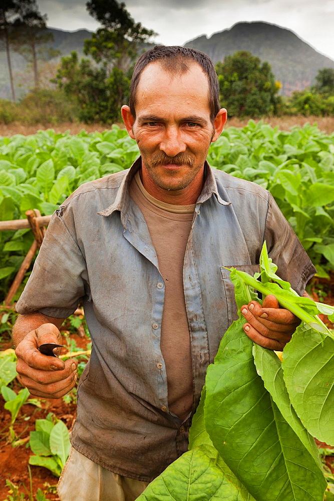 Cuba, Pinar del Rio Province, Vinales, Vinales Valley, tobacco planter, NR