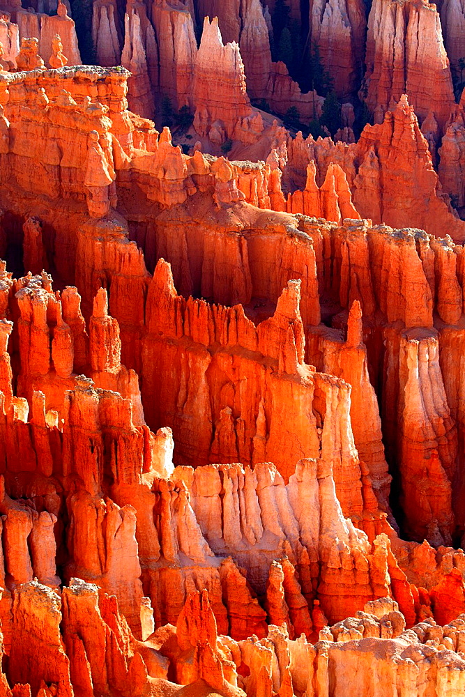 Red rocks at the Bryce Amphitheater in Utah