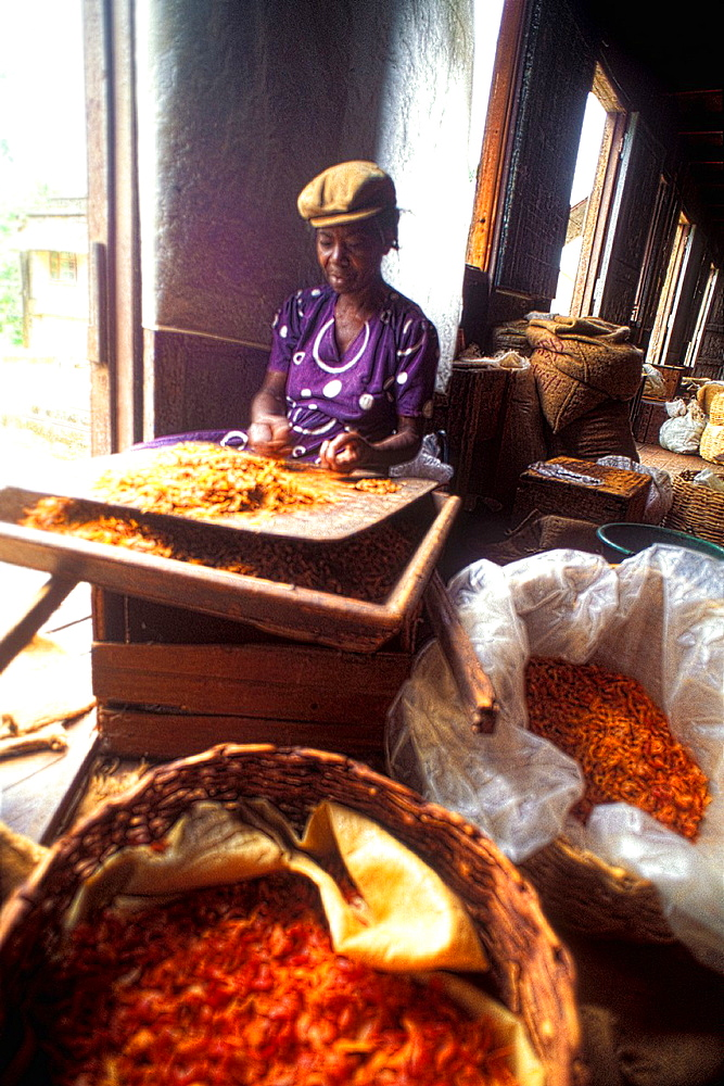 Woman separating tropical spices Grenada