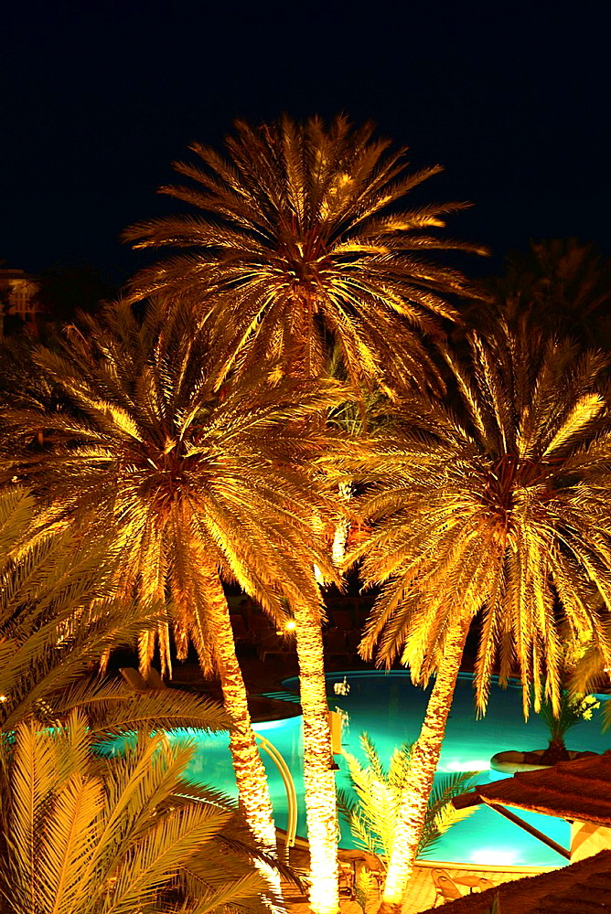 Date Palm Trees, Odyssee Resort, Zarsis, Tunisia