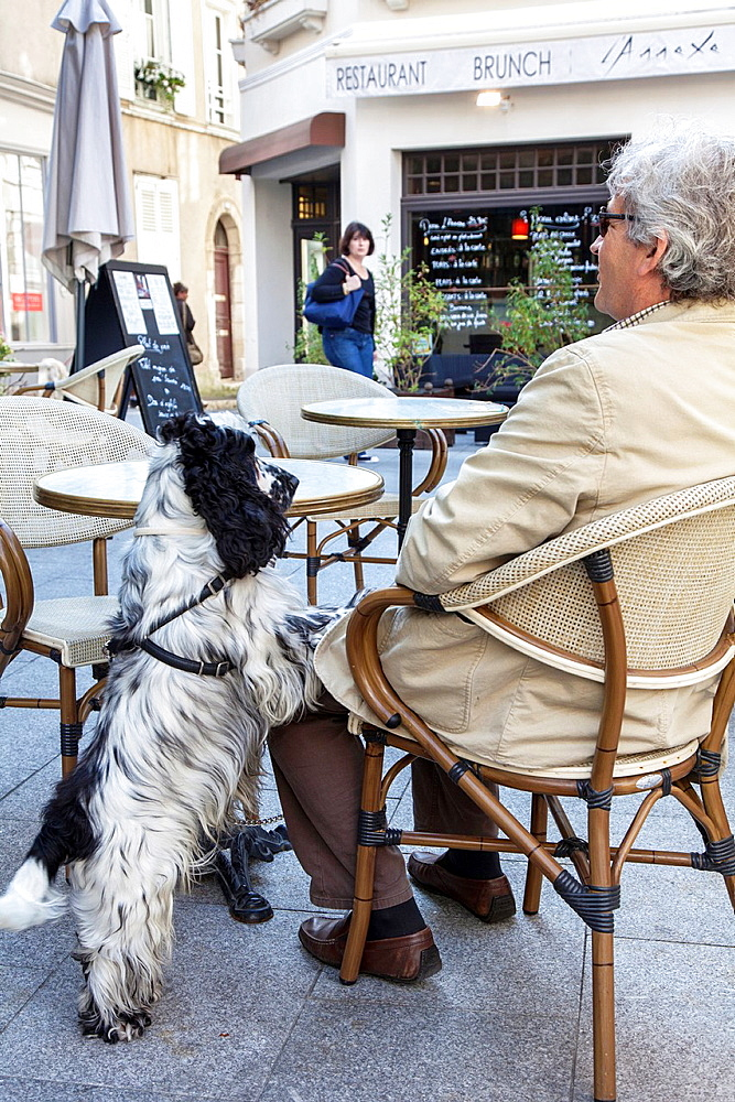 Dog and man at cafe table outdoors in Chartres, Loire, France