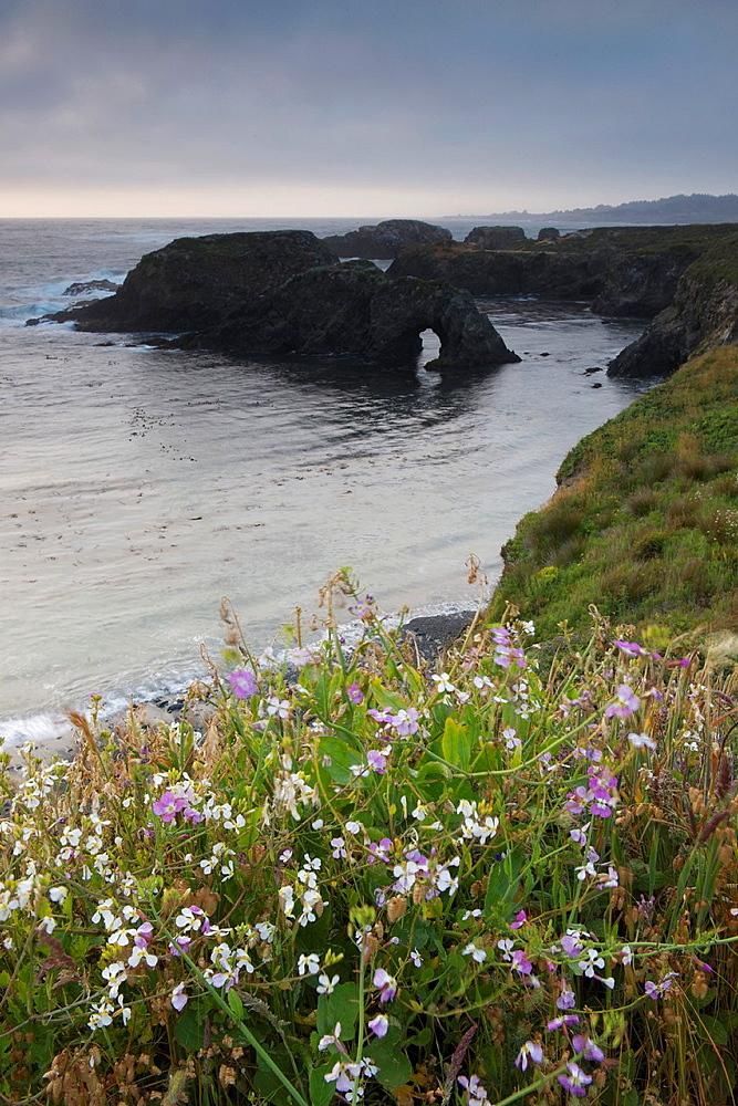 Wildflowers along the Northern California coast