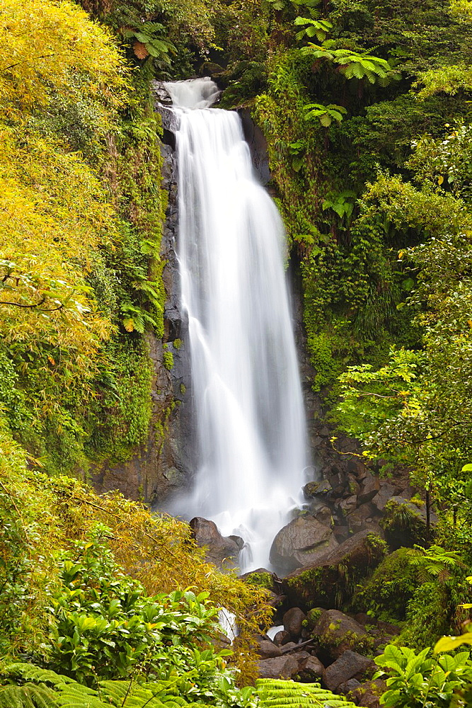 Dominica, Roseau, Roseau Valley, Trafalgar Falls