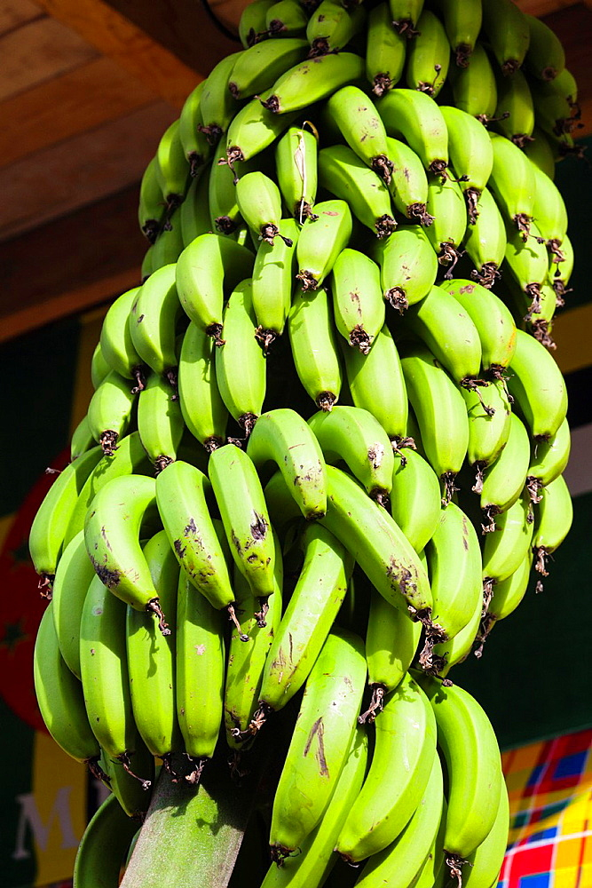 Dominica, Roseau, tropical vegetation, bananas