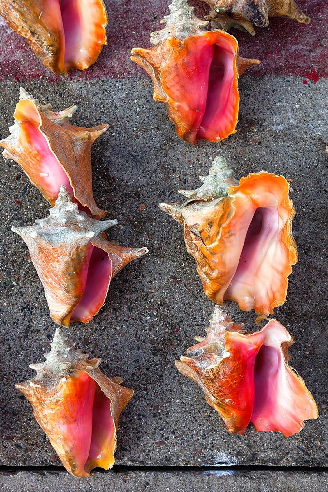Bahamas, New Providence Island, Nassau, Straw market, souvenirs, conch shells