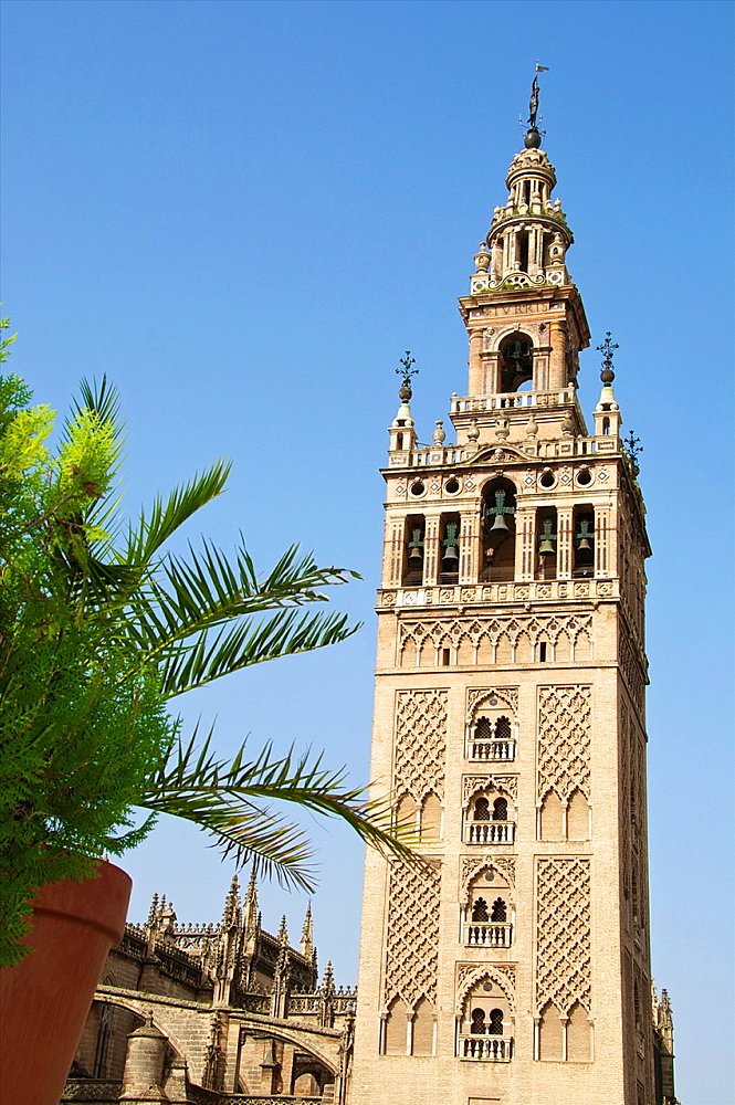 Giralda seen from a terrace , Seville, Andalusia, Spain