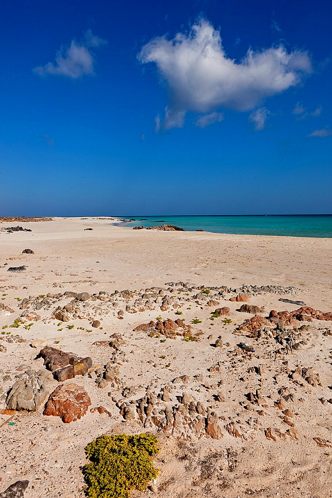Erher, east coast, Socotra island, listed as World Heritage by UNESCO, Aden Governorate, Yemen, Arabia, West Asia.