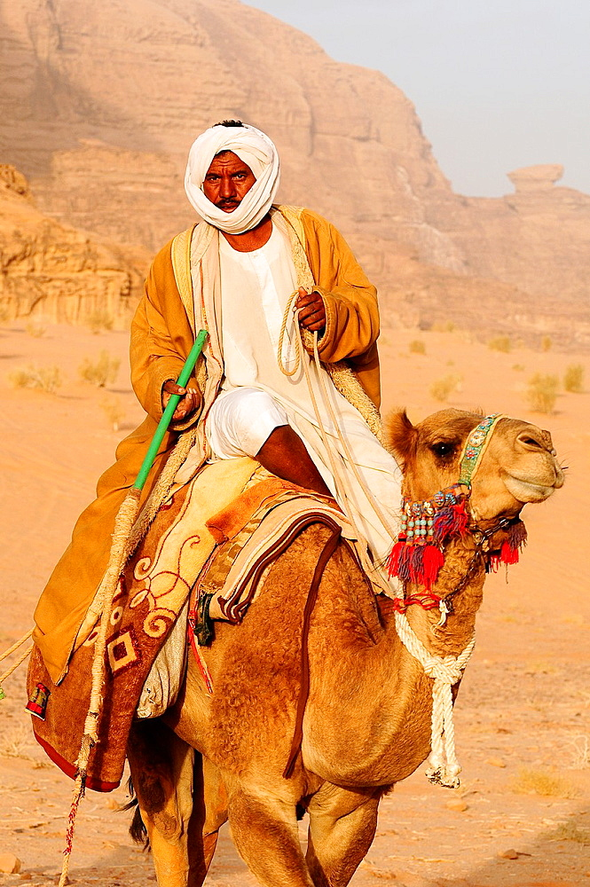 A beduin man with his camels, Wadi Rum desert, Jordan, Middle East.