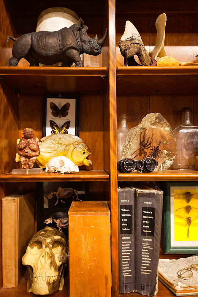 USA, Oklahoma, Oklahoma City, Museum of Osteology, animal skeletons
