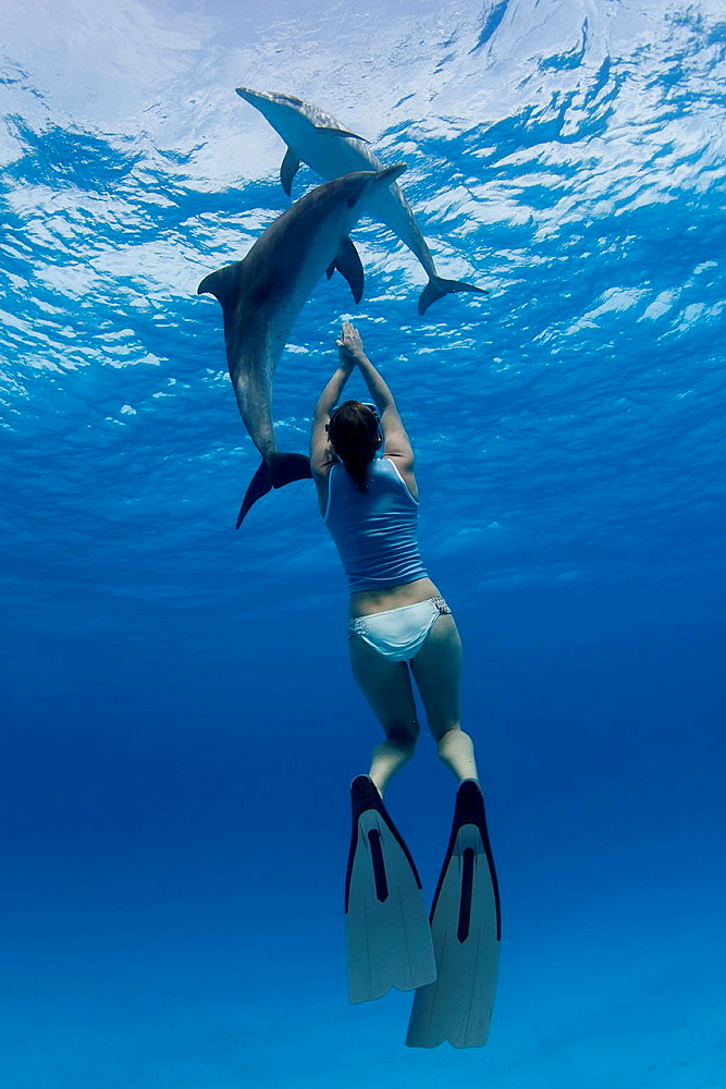 Snorkeler swimming with dolphins
