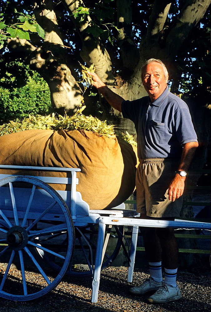 man showing his production at the Tilia fair of Buis-les-Baonnies, Drome department, region of Rhone-Alpes, France, Europe