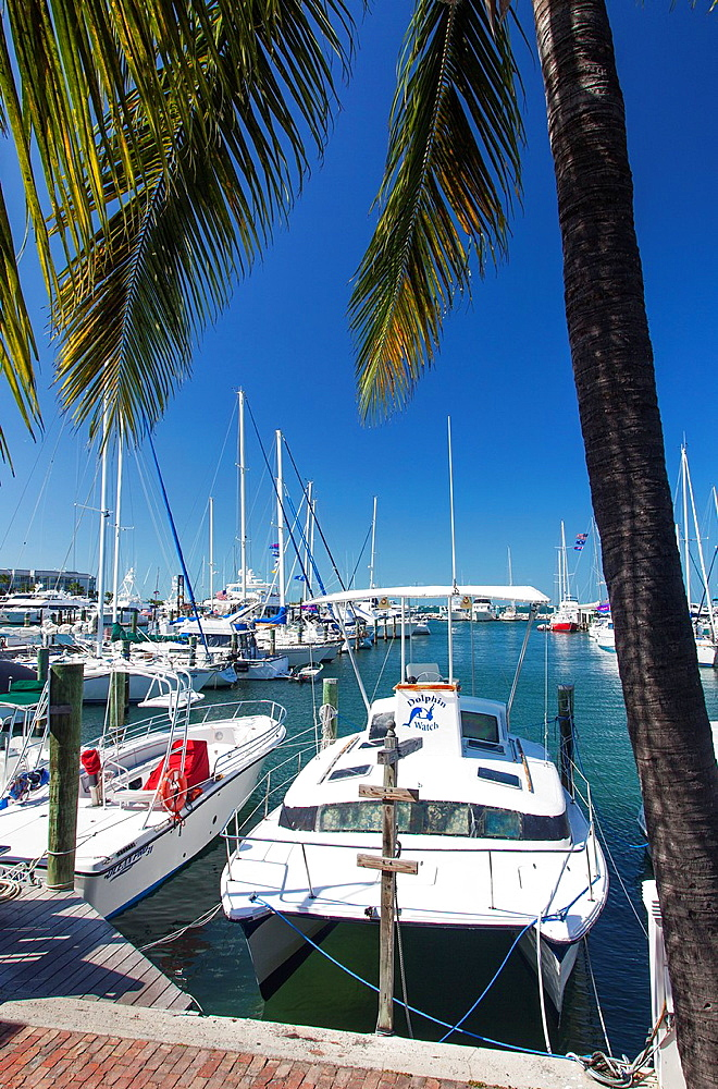 Key West Marina, Key West, Florida, USA