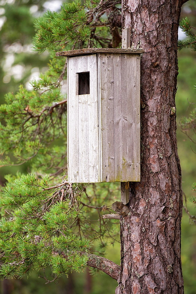 Closeup of big wooden birdhouse on pine tree trunk in forest