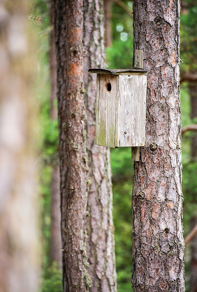 Wooden birdhouse on pine tree trunk in forest
