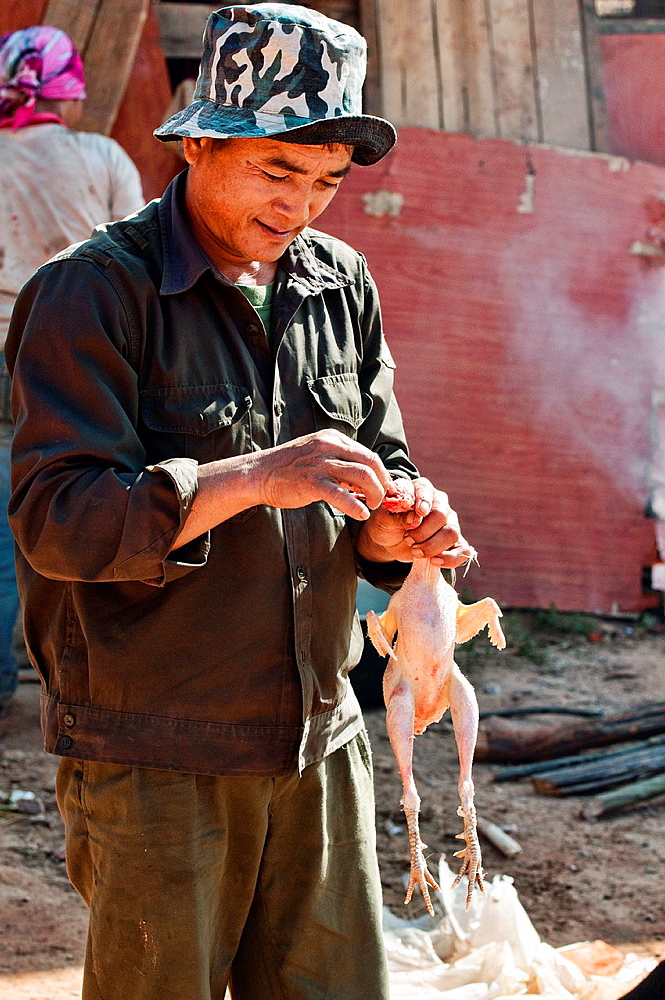 ethnic Akha man cleaning his chicken for cooking, Muang Singh, Laos
