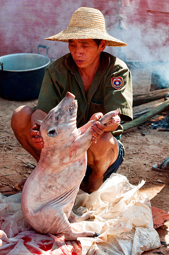ethnic Akha man cleaning his pig for cooking, Muang Singh, Laos