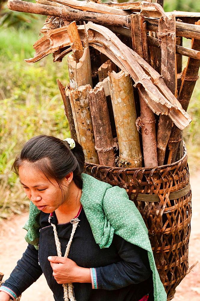 Ethnic Lanten woman carrying wood, Luang Nam Tha, Laos