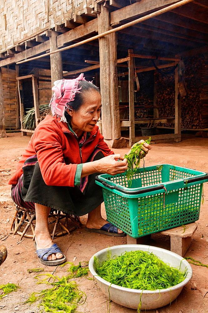 ethnic Khmu woman cleaning Mekong river weed, Luang Nam Tha, Laos