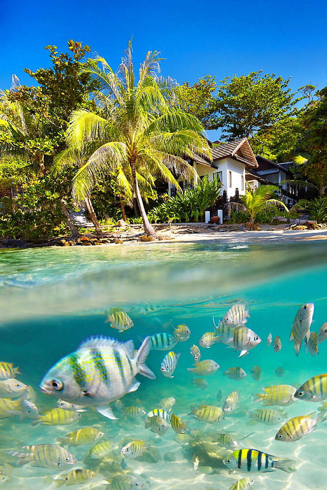 Underwater sea view of small fish at Ko Samet Island, Thailand, Asia