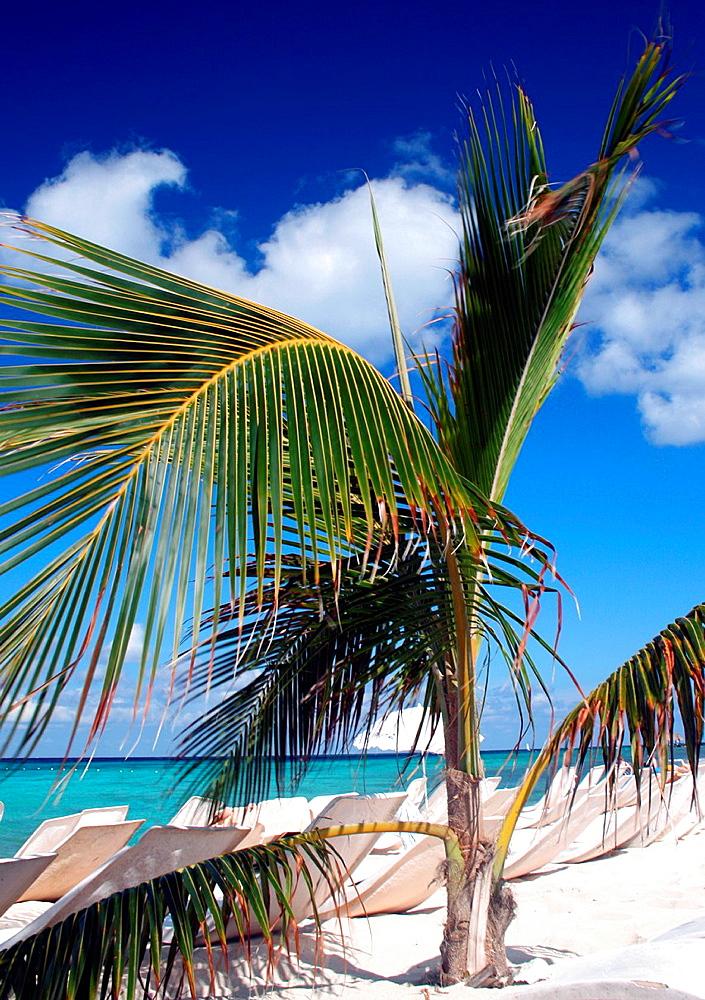 A palm plant decorates a beautiful white sand beach on a Caribbean island
