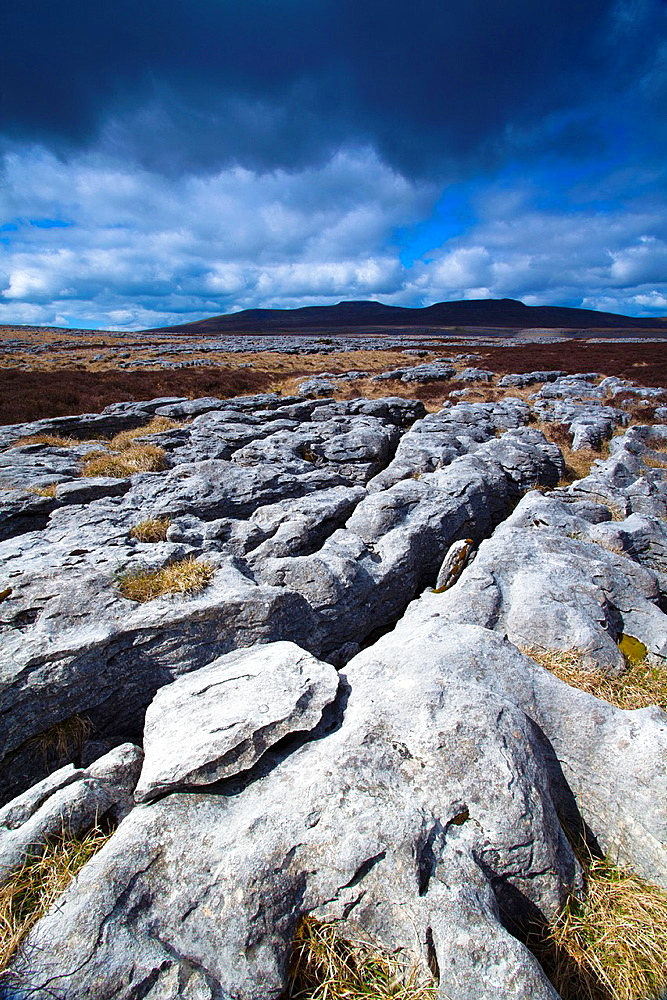 England, North Yorkshire, Yorkshire Dales National Park. Limestone pavement known as Moughton Scars, near the small village of Horton in Ribblesdale, with the peaks of Ingleborough in the distance.