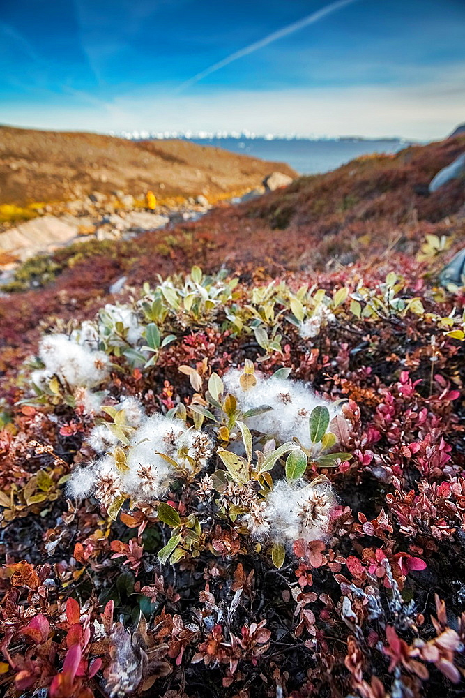 Autumn tundra landscape, Scoresbysund, Greenland.