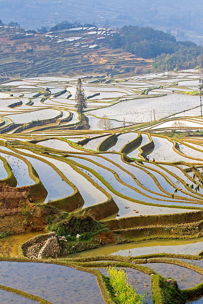 China , Yunnan province , Hani people, Yuanyang , Quanfuzhuang village, rice terraces ,.