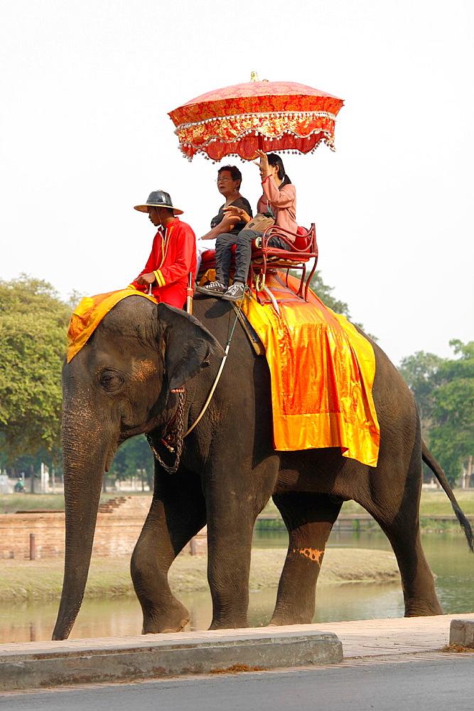 Elephant, Ayutthaya, Thailand.