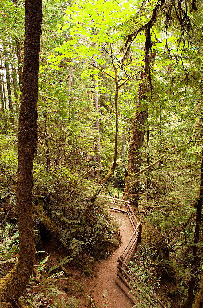 Trail in a mountain forest is outlined by a wooden fence line.