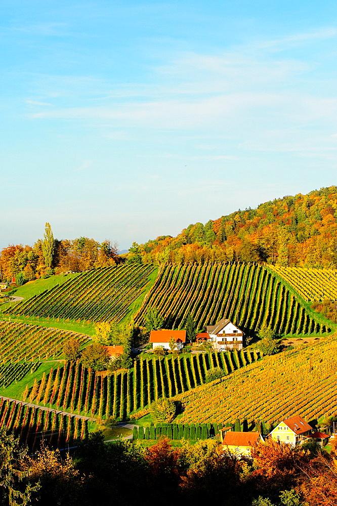 Suedsteirische Weinstrasse, Southern Styria wine route in autumn, Austria, Styria, Southern Styria, Saºdsteirische Weinstrasse.