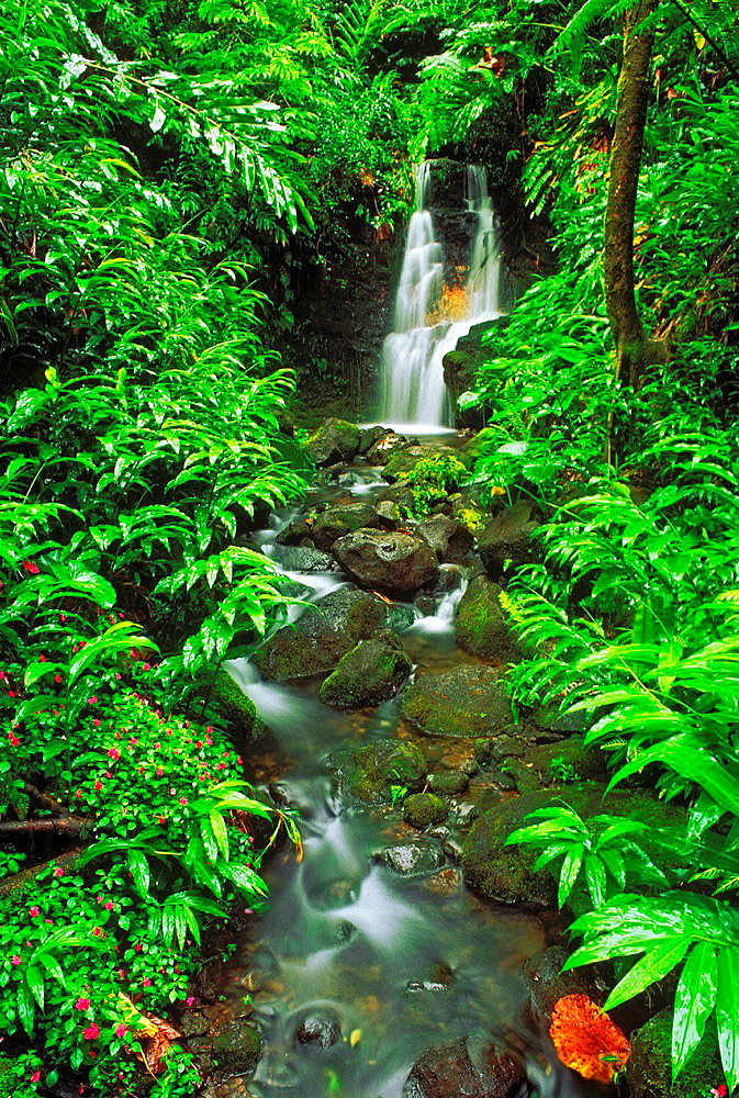 Lush vegetation and cascade along the Akaka Falls Trail, Akaka Falls State Park, The Big Island, Hawaii USA.