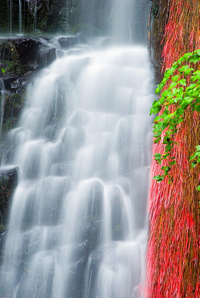 Coopey Falls, Columbia River Gorge National Scenic Area, Oregon USA.