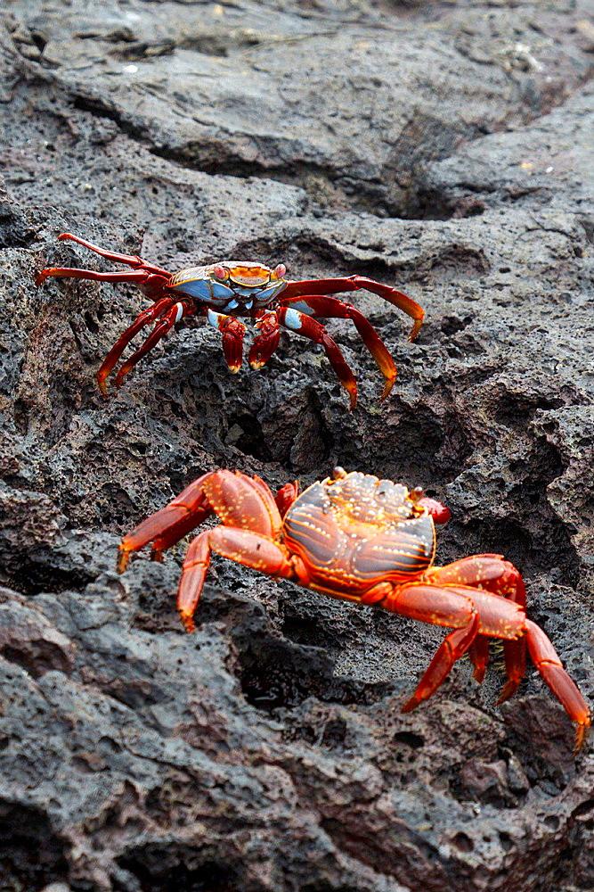 Galapagos Islands National Park, Bartolome Island, Galapagos, Ecuador.
