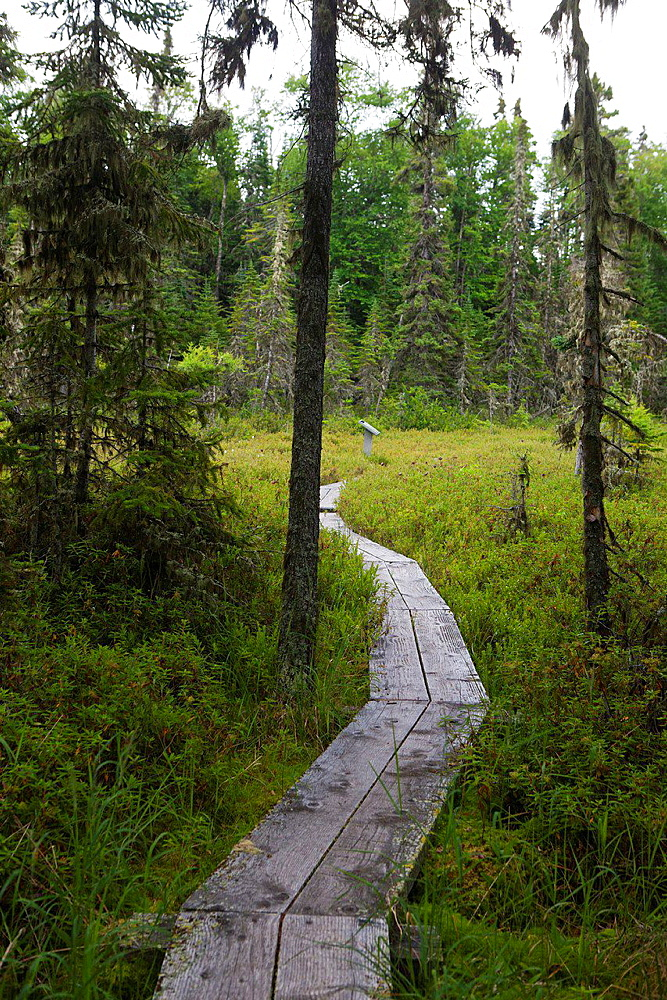 Boarded hiking trail through bog section of Raspberry Island, Isle Royale National Park, Michigan, United States of America.