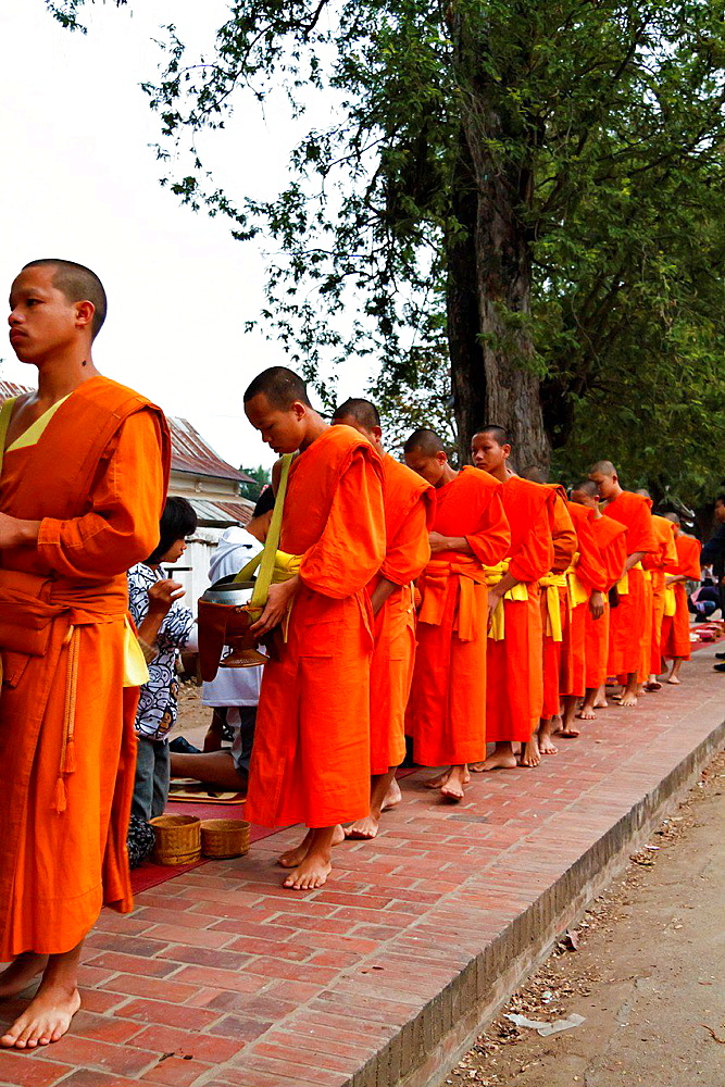 Monks collecting Alms in the early Morning in Luang Prabang, Laos