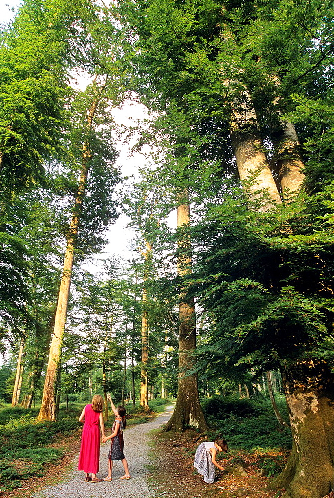 young woman and two little girls walking in Reno-Valdieu forest, Regional Natural Park of Perche, Orne department, Lower Normandy region, France, Western Europe.