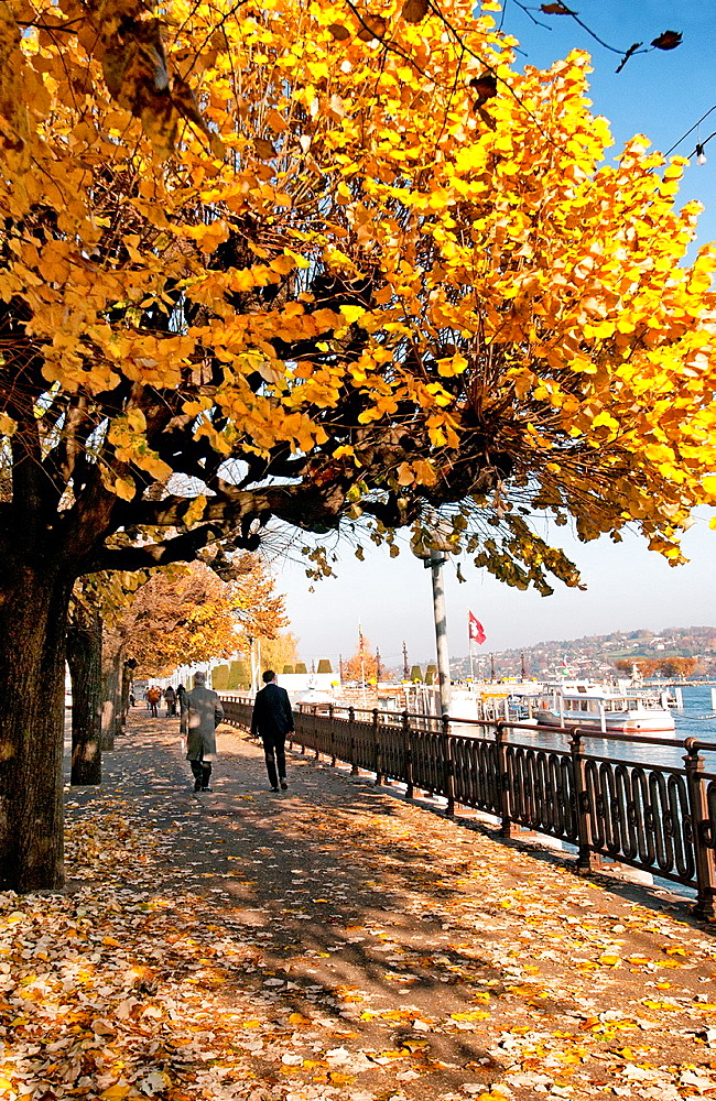 plane-trees, autumn colors, Quai du Mont-Blanc promenade, one of main streets in Geneva on a shore of Geneva Lake, Geneva, Switzerland, Europe