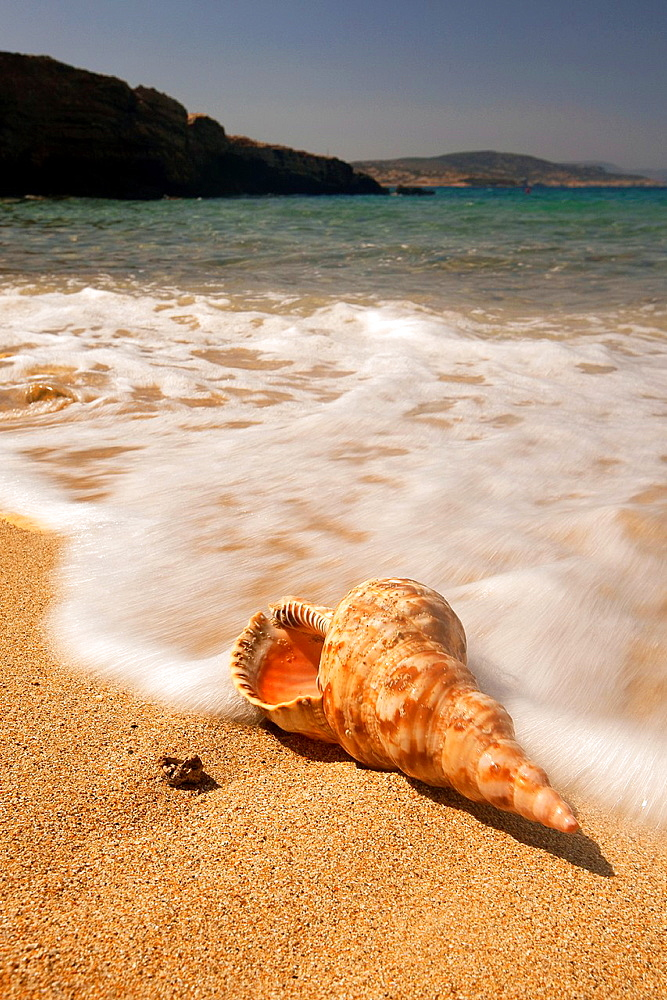 Seashell on the beach, Naxos, Cyclades Islands, Greek Islands, Greece, Greece, Europe.