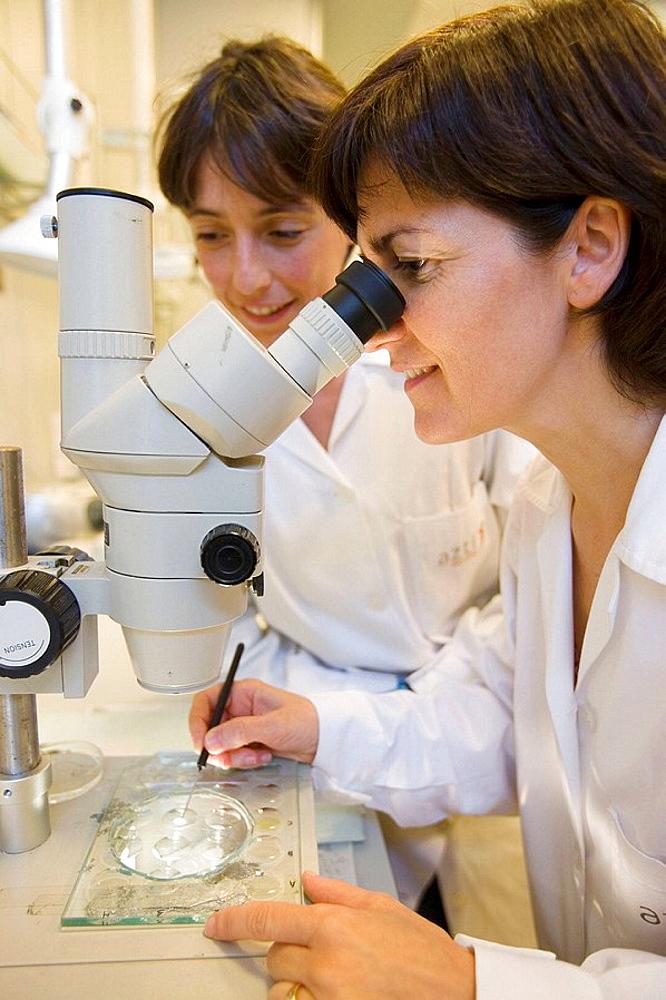 Plankton analysis, PVA Software, Plankton laboratory, AZTI-Tecnalia, Technological Centre specialised in Marine and Food Research, Pasaia, Gipuzkoa, Euskadi, Spain.