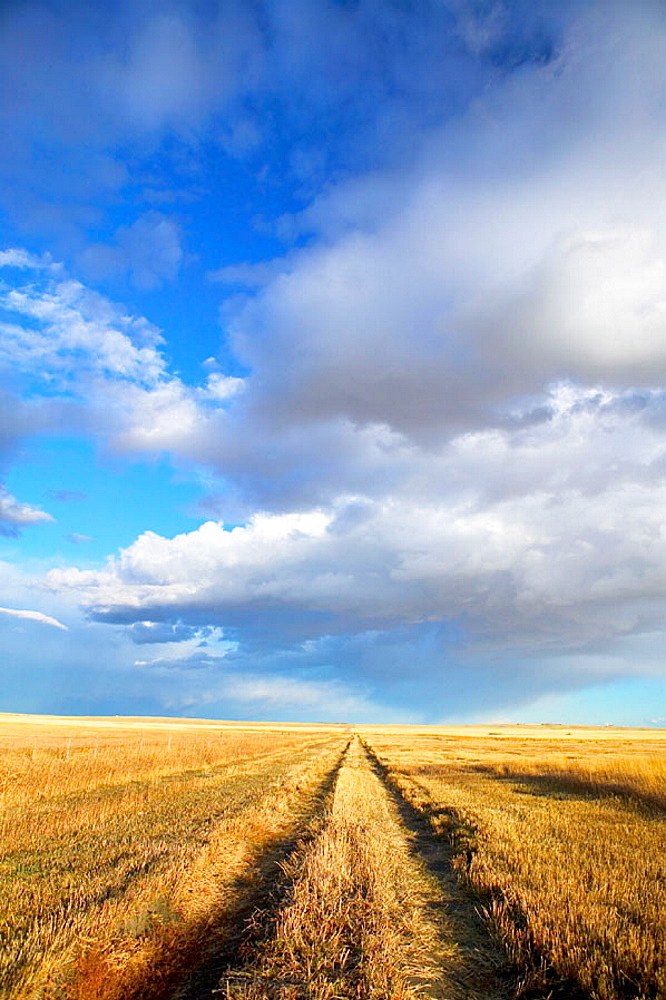 Wheat field road, landscape with dramatic sky, Stand Off, Alberta, Canada