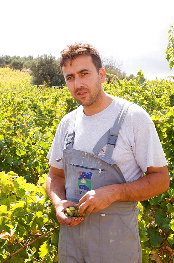 In a village called Dafnes, located in the surrounding mountains of the main city, Heraklion, a wine maker Nikos Doulouphakis, Crete, Greece.