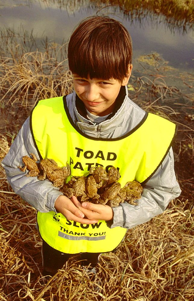 Amphibians rescued from road, Hungary