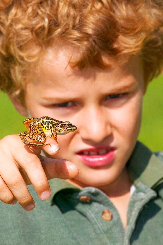 Seven years old boy holding a pickerel frog (Rana palustris), Pennsylvania, USA