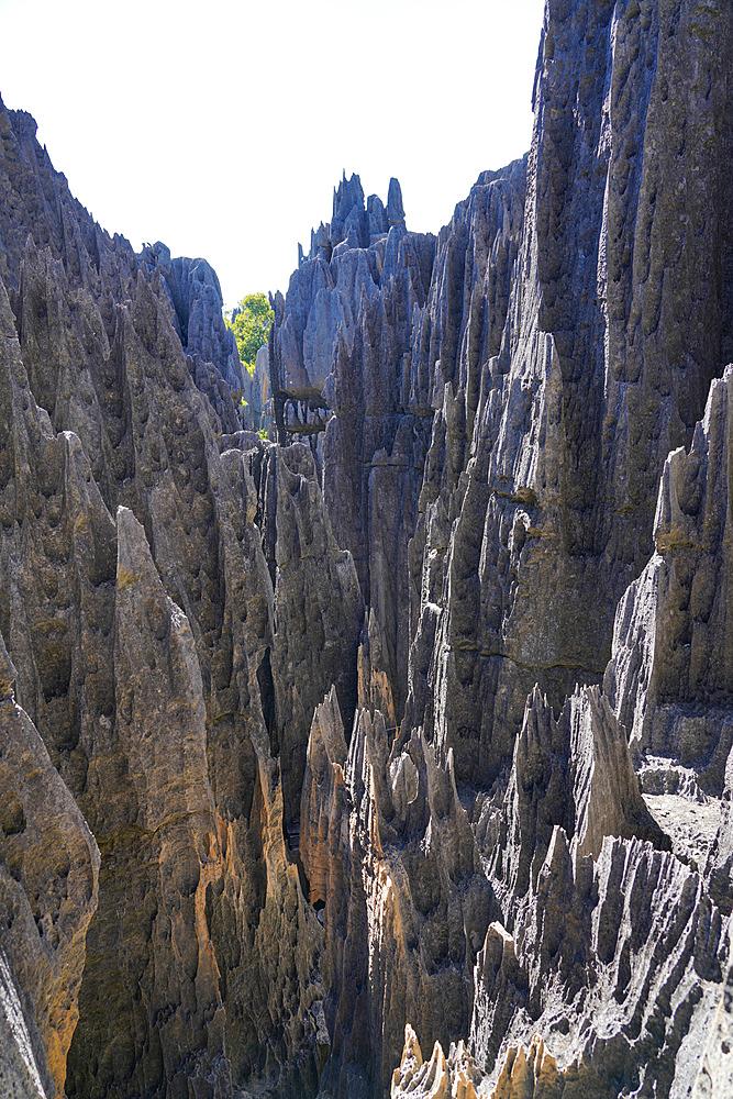 Tsingy de Bemaraha National Park, Melaky Region, Western Madagascar - 819-1014