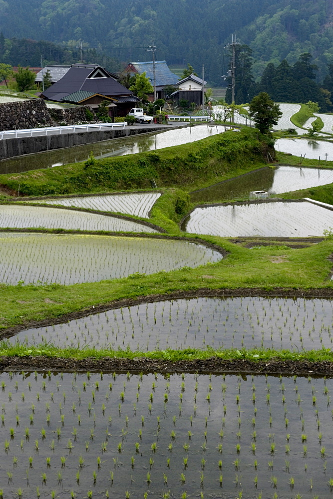 Flooded rice paddy terraces in early spring in mountain village of Hata, Takashima, Shiga, Japan, Asia - 822-253