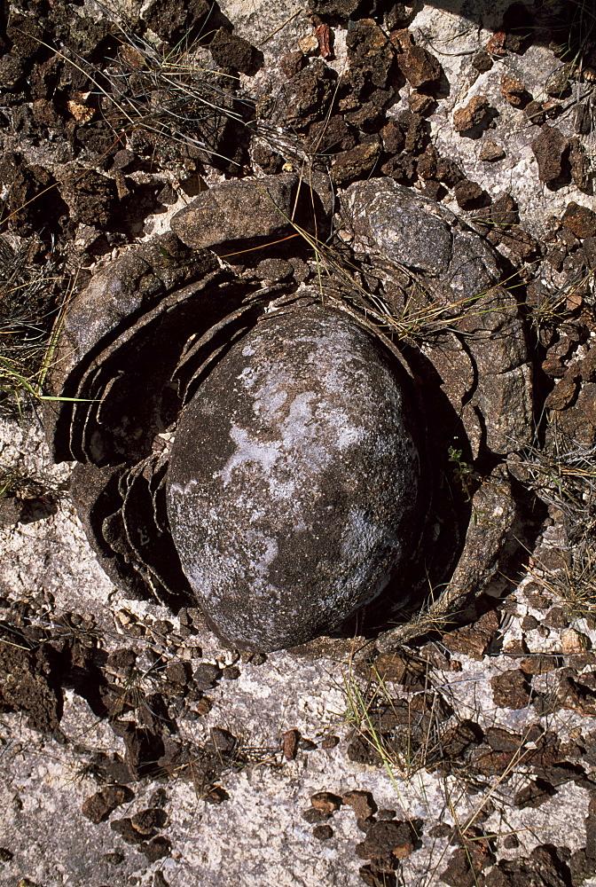 Eroded granite near Mount Roraima, Gran Sabana, Estado Bolivar, Venezuela, South America